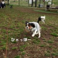 祝!「まる」1年目のうちの子記念日(*^_^*)