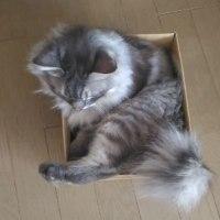 小さい箱のとりあい