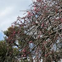 木々や花の画像はけっこう重い。続、緑、梅。