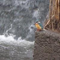 雨の隼人堀川