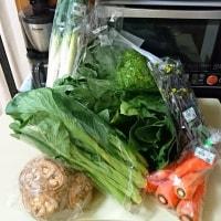 春の野菜を大量仕入れ!