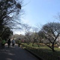 梅林公園 いい散歩となったかな。