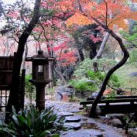 殿ケ谷戸庭園の紅葉
