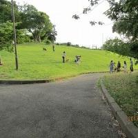 六月十七日の公園