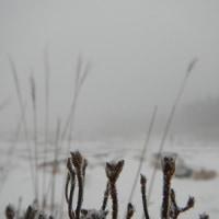 1月22日(日)のえびの高原