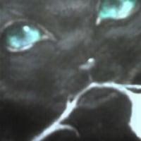 黒猫展告知