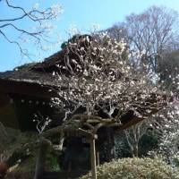 江の島 と 鎌倉