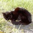 SFTS 感染野良猫に噛まれた女性、たちまち死亡。