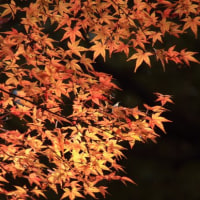 少し見頃が過ぎていた根津美術館の紅葉  (2)