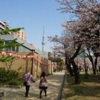 桜の季節2016春