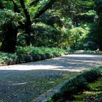 新宿御苑を散策 其の4