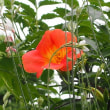 みかんとベランダの花