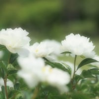 5月の薬草園
