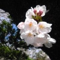 花が舞いし、日本の景色
