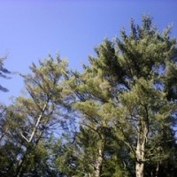 凍て付く一月のニューイングランドの森