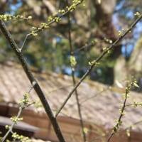 春がきた [森へ行く道 <26>]