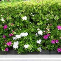 新緑と白いお花が眩しい