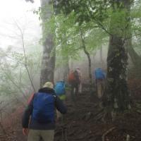 三頭山 雨の山行
