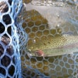 6月19日 Fish On 王禅寺