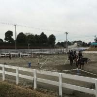 馬の仕事につくために アニベジ奮闘記 エピソード220