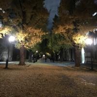 夜の銀杏並木
