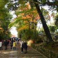 2016 そうだ京都、行こう~ (4)光明寺