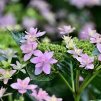 筥崎宮花庭園からp3(D810,28-300mm)