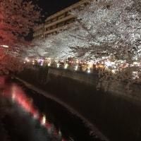 夜桜    4 ー8  土曜