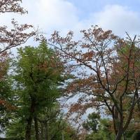 桜葉の紅葉・・・