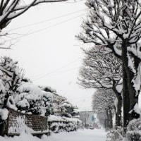 17-02-20 雪掻き