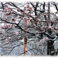 寒波猛威(^^♪寒い日に一番頼りにする防寒具といえば?「高機能肌着」