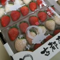 前田氏が作った素敵な『奈良いちご』。超優秀な教え子さんに逢うと誇りを感じます。
