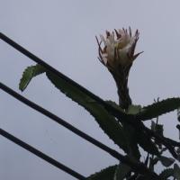 なんと花が咲いた(驚)沖縄の貸別荘♪