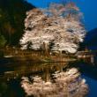 下呂市 樹齢400年「苗代桜」 5分咲きとなりました。 4月14日