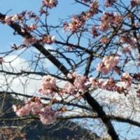 春が来た‼