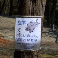 危険 ここにいのししの捕獲わな有り 危険 近づかないように!/大阪府東大阪市上四条町