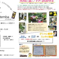 再掲 明日、溝ノ口駅から徒歩5分、イトーヨーカドー斜め前での耳つぼジュエリー西川さんと花販売NAEとのコラボ実施!