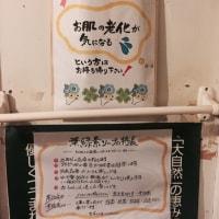 葉緑素化粧品の架け橋