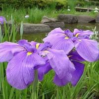 屋敷内周辺の全植木に水遣り、君子蘭には日除け、これで才気煥発