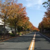 近場で紅葉を楽しむつもりだったが