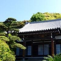 『新緑』 妙大寺