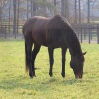 馬・馬づくし-北海道のたび3