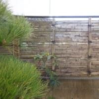 竹の生垣のリフォーム(計画編)