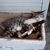 薩摩半島で会った猫