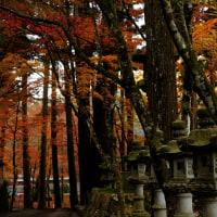 紅葉(仏通寺)