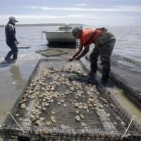 貝類収穫区域を閉鎖   ワシントン州