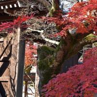 京都観光 Ⅱ