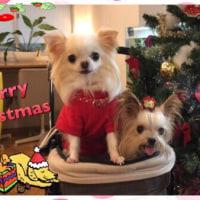 ゆうきと みづきの Christmas season...part 2