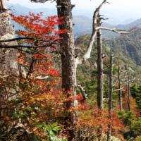 紅葉を訪ねて~石鎚山