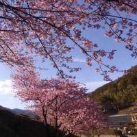 春の樹 春樹